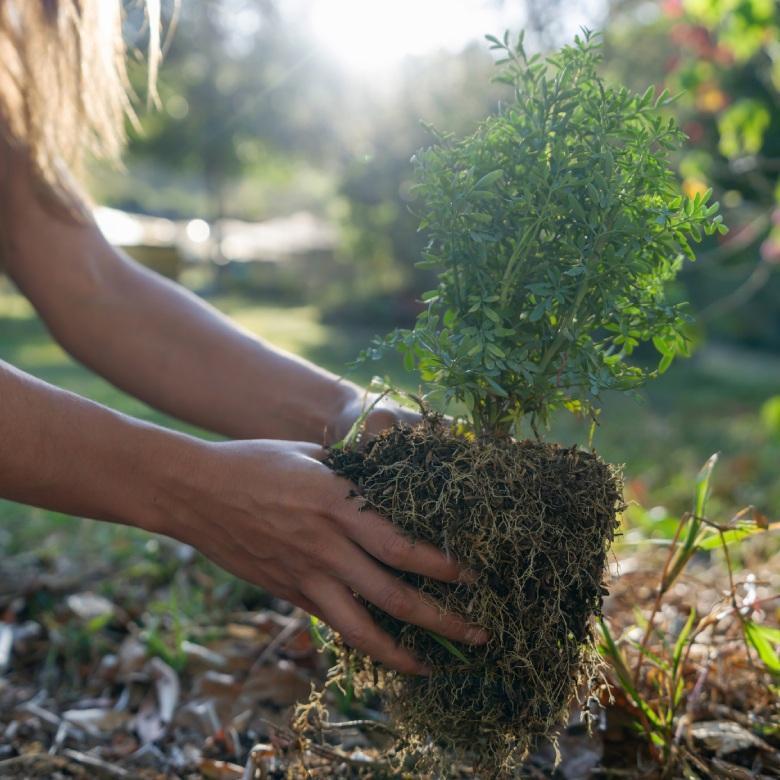 sadzenie drzew ikrzewów
