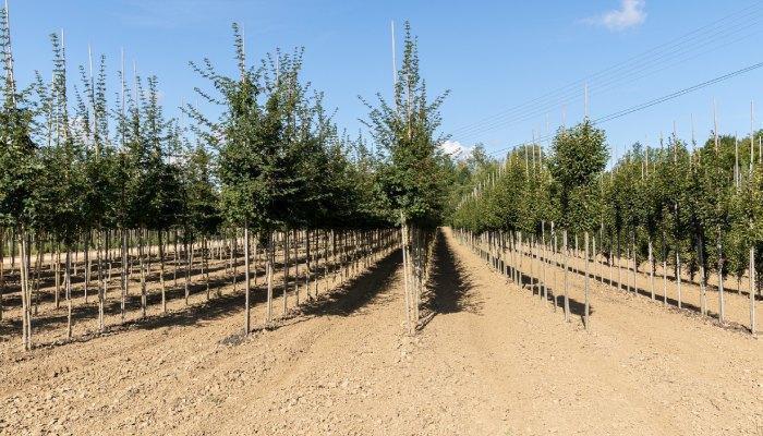 szkółka drzew i krzewów 1