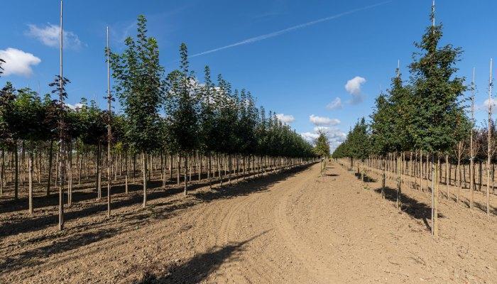 szkółka drzew i krzewów 3