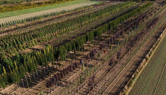 szkółka drzew i krzewów 4