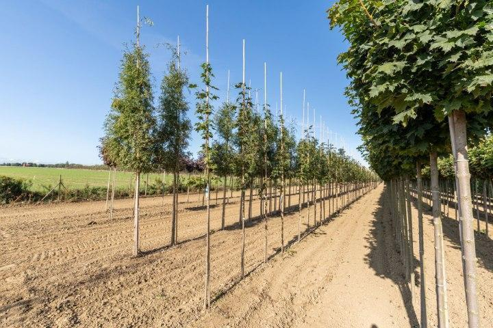 realizacja-szkolka-drzew-i-krzewow-1