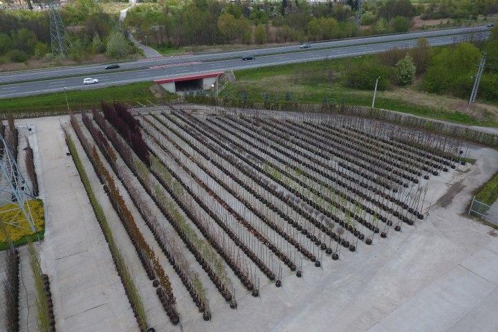 realizacja-szkolka-drzew-i-krzewow-2