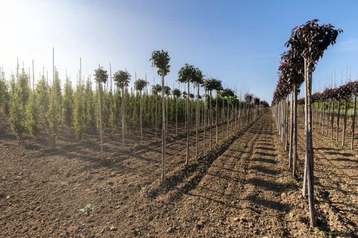 realizacja-szkolka-drzew-i-krzewow-3