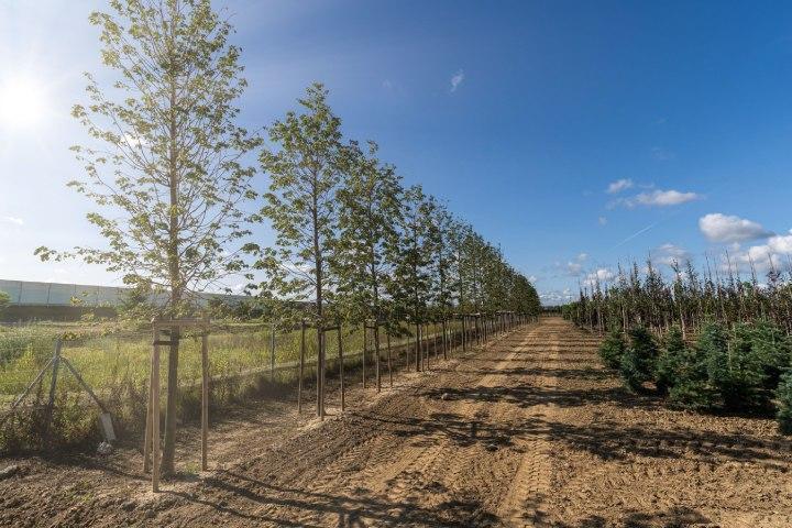 realizacja-szkolka-drzew-i-krzewow-4