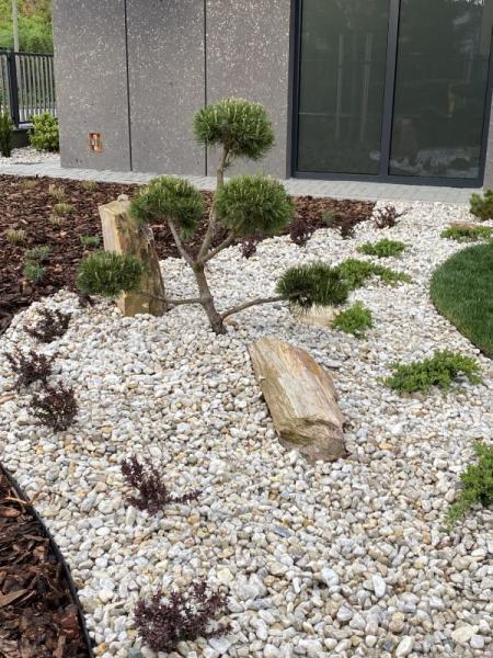 kamień ogrodowy jasny zielone drzewka