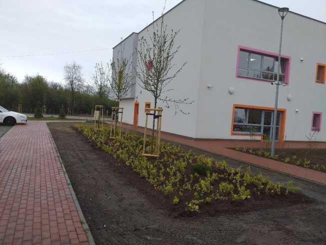 sadzenia-drzew-i-krzewow-1