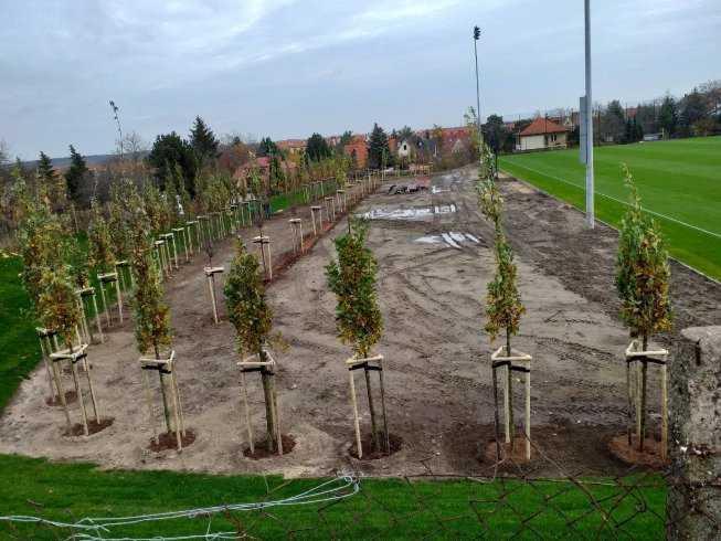 sadzenia-drzew-i-krzewow-2