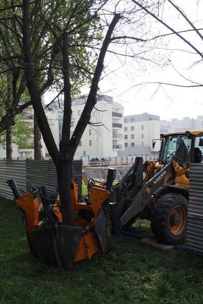 rok-2017-przesadzanie-drzew-dla-dewlopera-w-krakowie-4