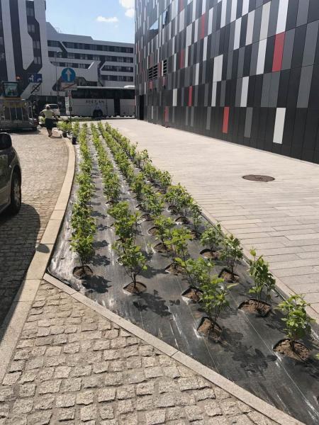 rok-2017-zagospodarownaie-terenu-zielengo-dla-centrum-kongresowe-ice-7