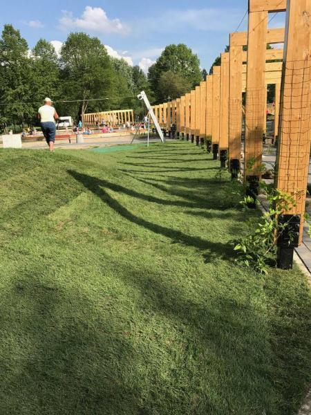 rok-2018-rozoenie-trawy-z-rolki-dla-miasta-sosnowiec-10