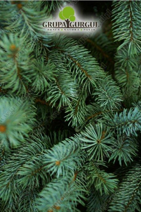 drzewo-39