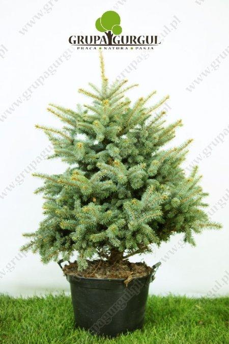 drzewo-01